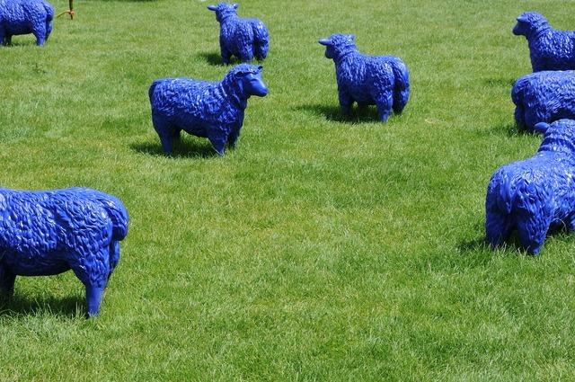 Sheep blue art.