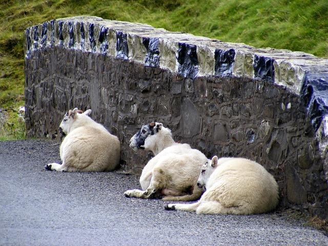 Sheep wool wall, transportation traffic.