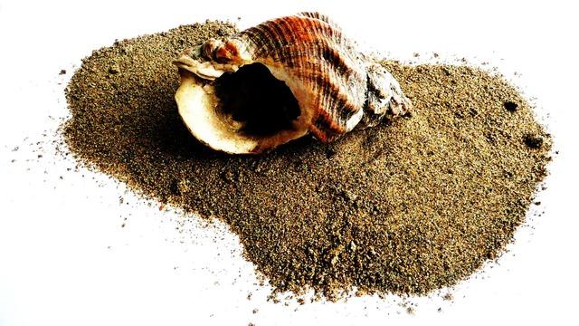 Shell beach sand, travel vacation.