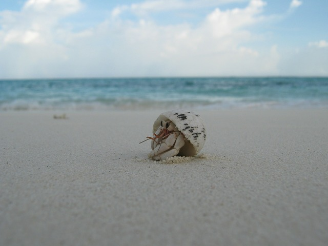 Shell creature beach, travel vacation.