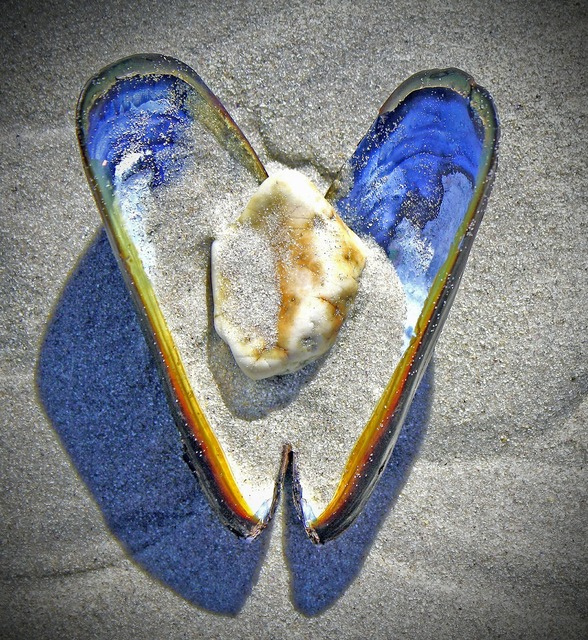 Shell heart stone, travel vacation.
