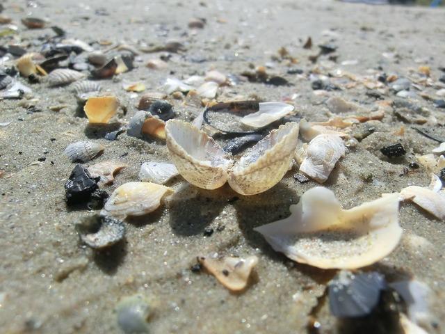 Shell sea beach, travel vacation.