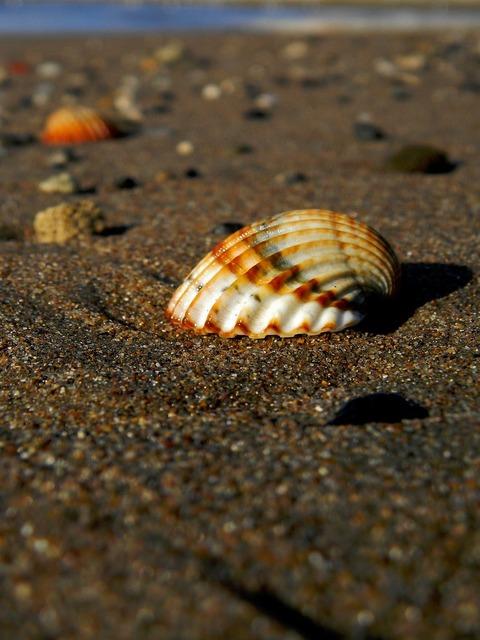 Shell sea sasa, travel vacation.