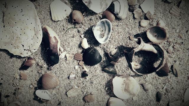 Shells beach belgium, travel vacation.
