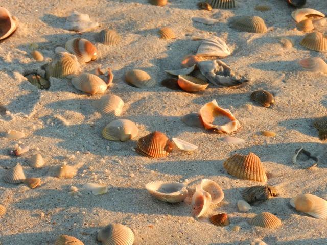 Shells beach sand, travel vacation.