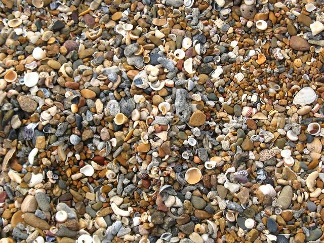 Shells beach shelly beach, travel vacation.