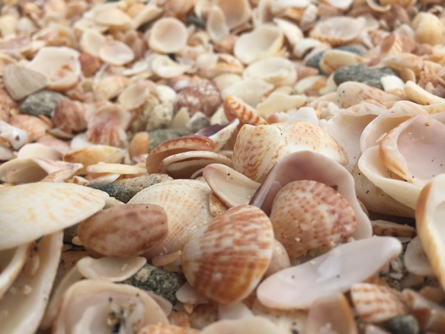 Shells beach starfish, travel vacation.