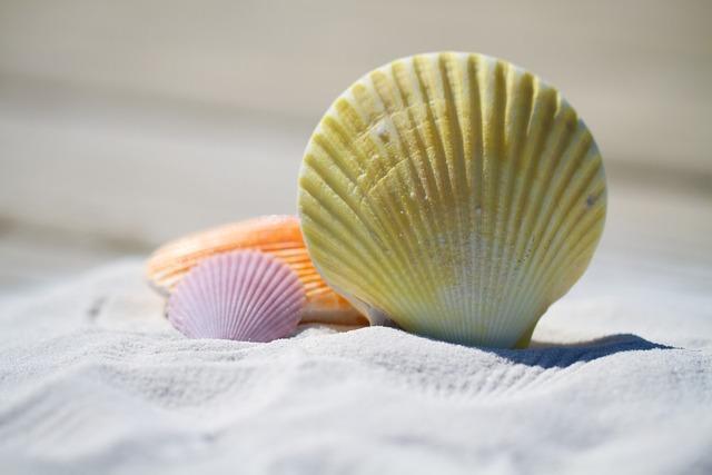 Shells massage therapy, travel vacation.