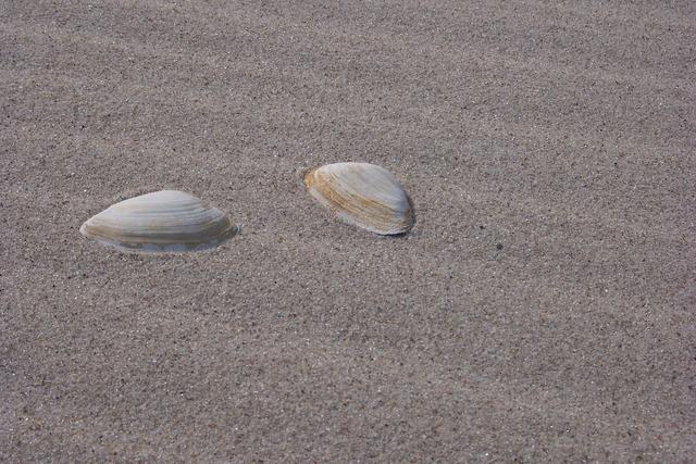 Shells sand beach, travel vacation.