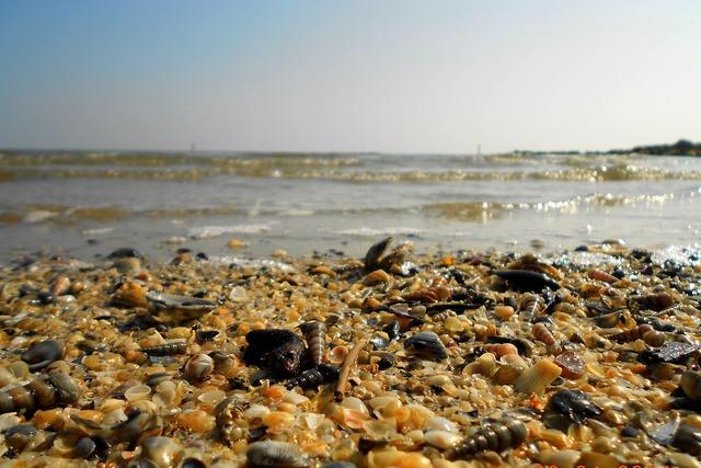 Shells sea beach, travel vacation.
