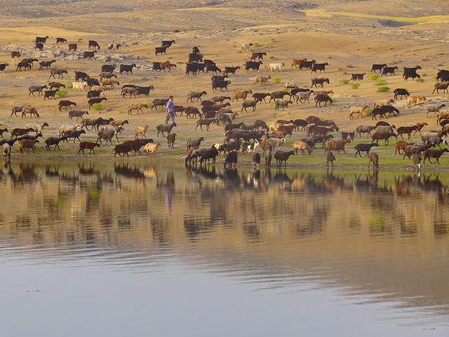 Shepherd livestock countryside.