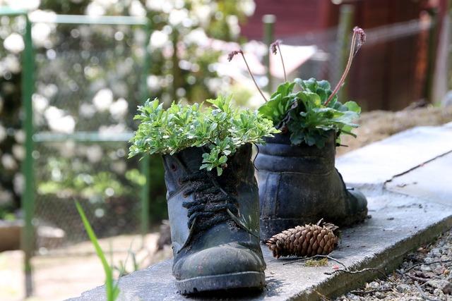 Shoes run plant, nature landscapes.