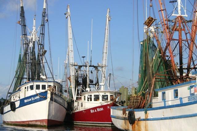 Shrimp boats coast.