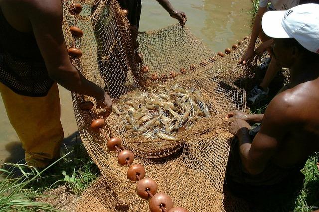 Shrimp crayfish fishing.