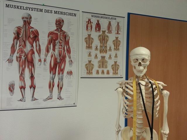 Skeleton bone anatomy, health medical.