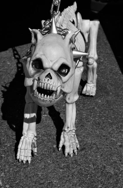 Skeleton dog watch dog spiked dog collar, emotions.