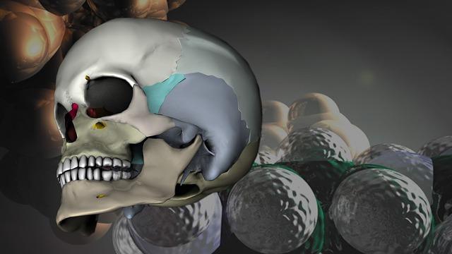 Skull head 3d model, health medical.