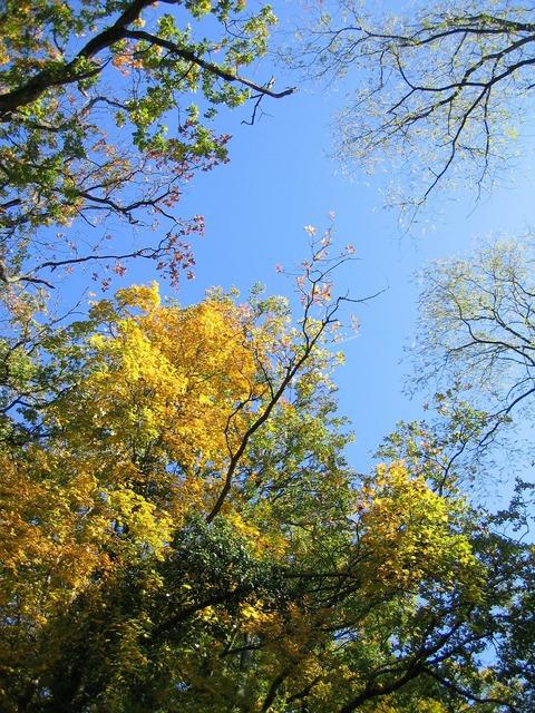 Sky trees canopy.