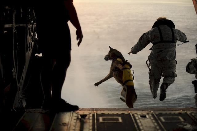 Skydiving jump dog, animals.