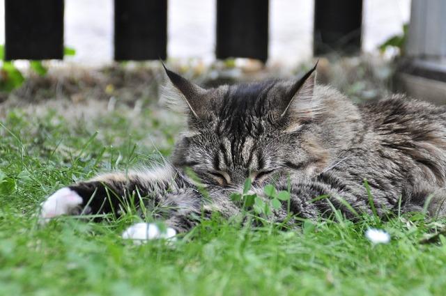 Sleeping cat mackerel, animals.