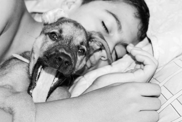 Sleeping dog kid, animals.