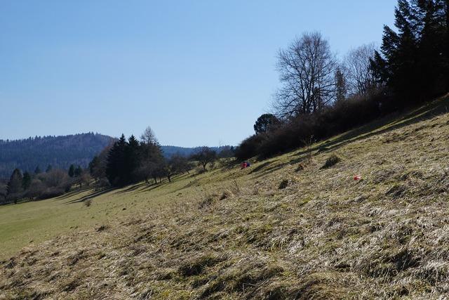 Slope meadow children, nature landscapes.