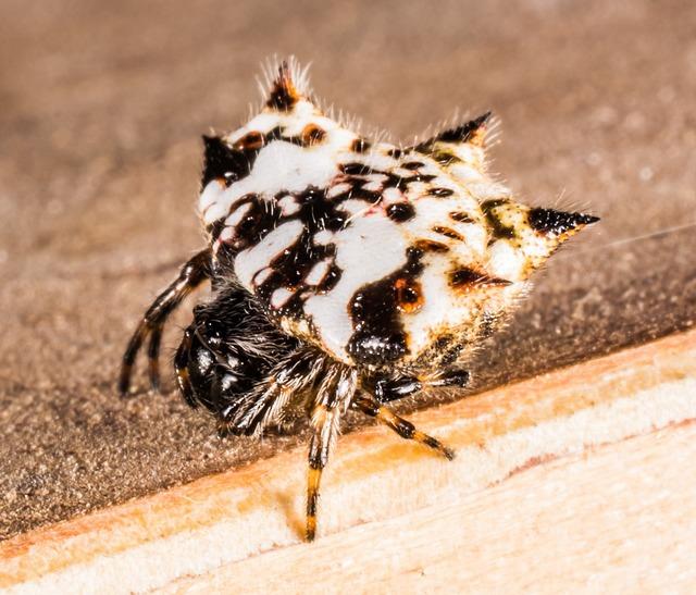 Small spider arachnid close.