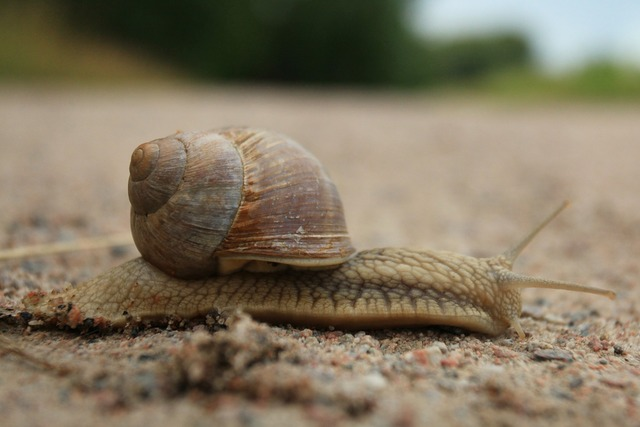 Snail animal molluscum, animals.