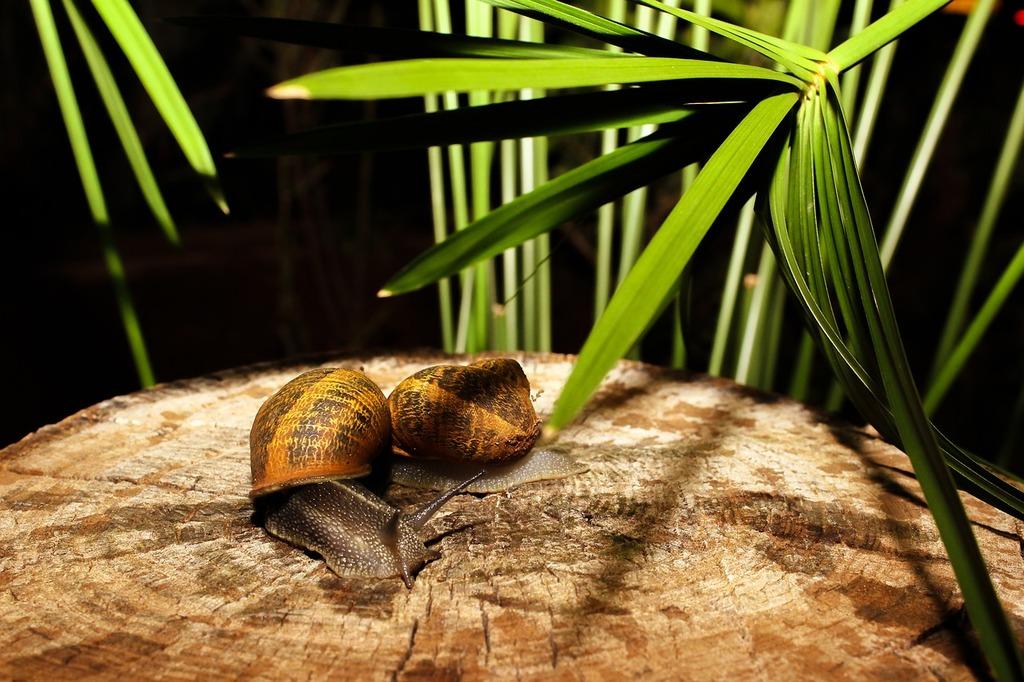 Snail animal nature, animals.