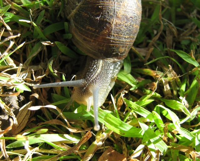 Snail garden animal, animals.