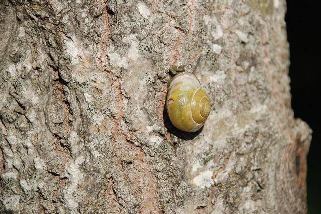 Snail mollusk shell.