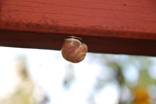 Snail mollusk shell, animals.
