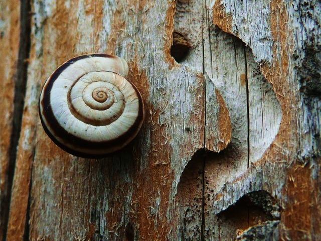Snail nature wildlife, nature landscapes.