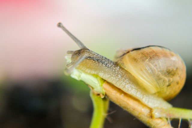 Snail seashell molluscs.