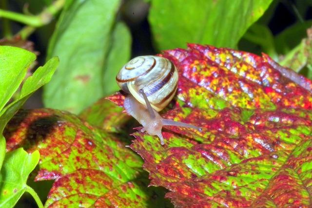 Snail small tiny.