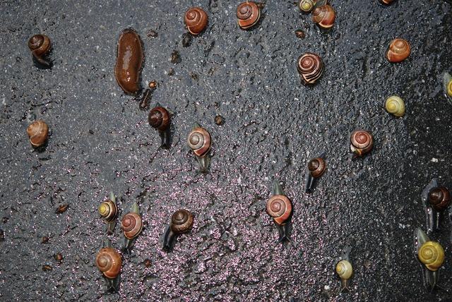 Snails mollusk gastropod.