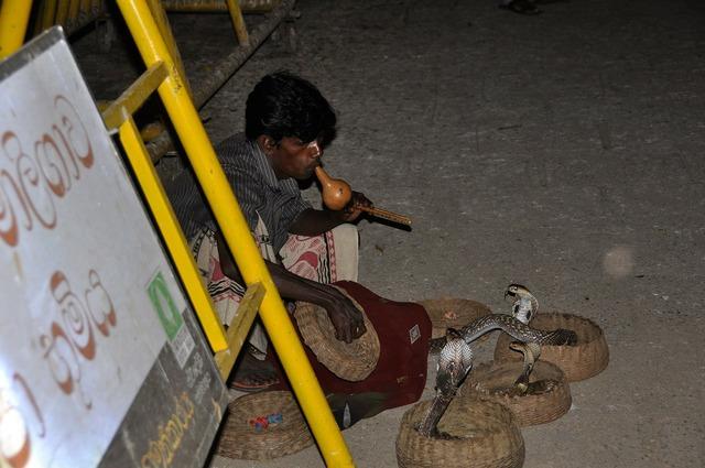 Snake charmer cobra snake, music.
