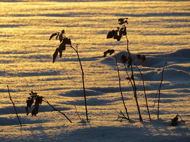 Snow landscape snowfield back light, nature landscapes.