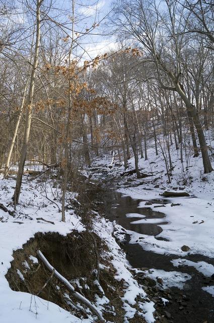 Snow park trees.