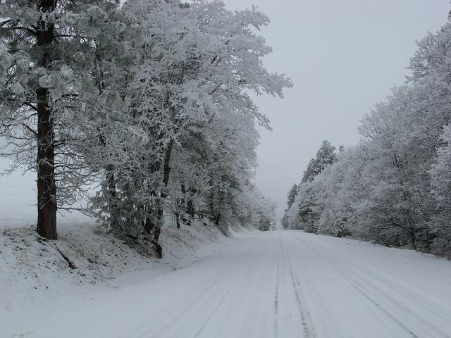 Snow road trees, transportation traffic.