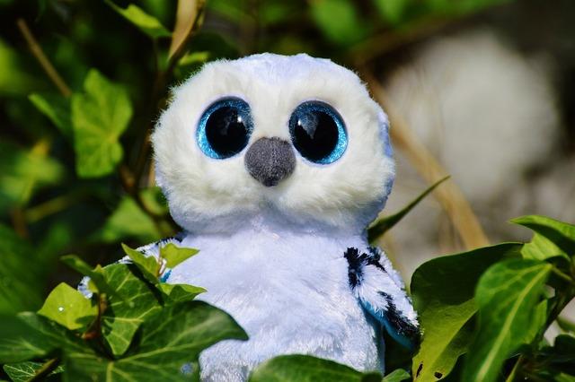 Snowy owl white bird, animals.