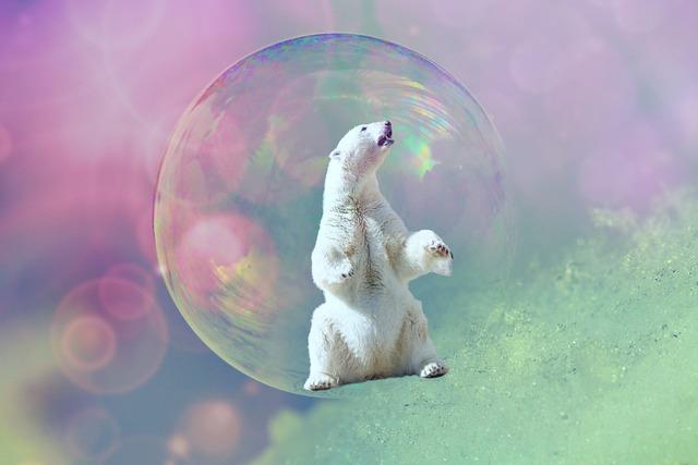 Soap bubble polar bear animal, animals.