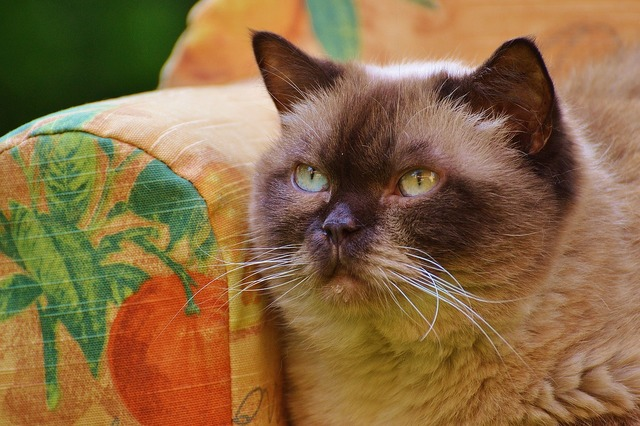 Sofa couch cat, animals.
