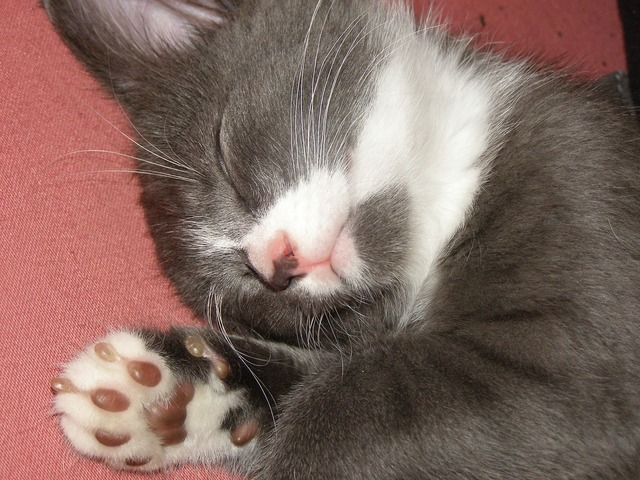 Soft paws cat kitten, animals.