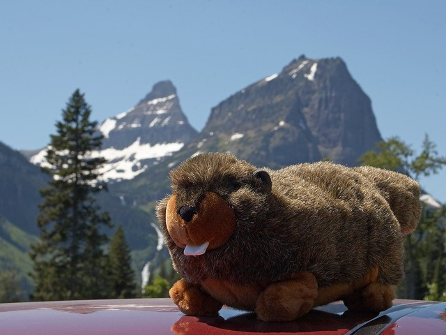 Soft toy marmot mountains.