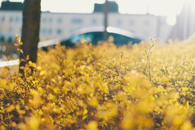 Solar bush green.