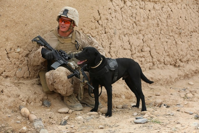 Soldier dog companion, animals.