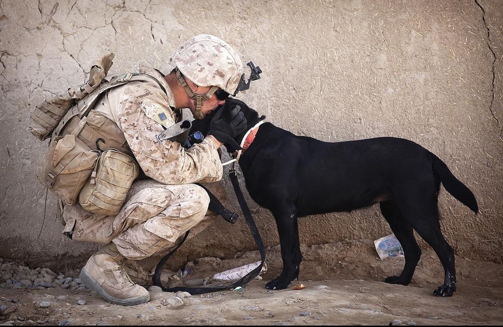 Soldier dog companion, animals.