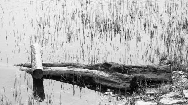 Solitude koyo desolation.