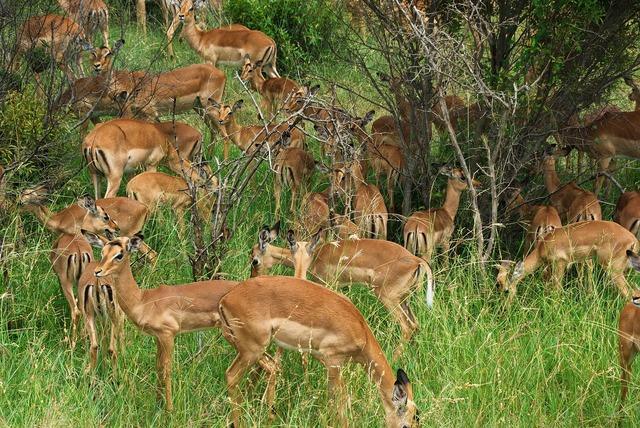 South africa park kruger.